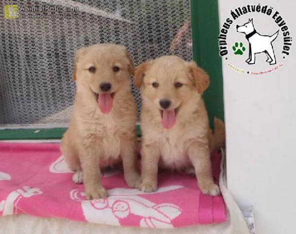 Mentett kutyatestvérek