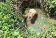 Vízből mentett kutya