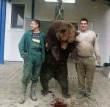 Medvevadászok