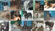 Állatmenhely, mentett kutyusok