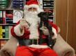 Állatmenhely támogatás, kutyakarácsony