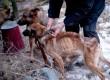 Megkínzott kutyák, állatkínzás