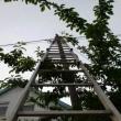 Cicamentő Angyalok - oszlopra fennragadt macska