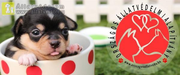 Országos Állatvédelmi Alapítvány