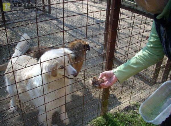 Mentsvár az Állatokért és Környezetünkért Kiemelkedően Közhasznú Alapítvány
