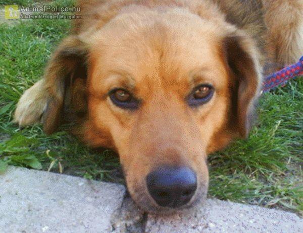 Befogad-Lak Állat és Természetvédő Közhasznú Alapítvány