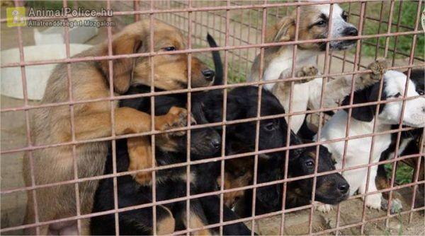 Menhely az Állatokért Környezetvédelmi és Állatvédelmi Kiemelkedően Közhasznú Alapítvány