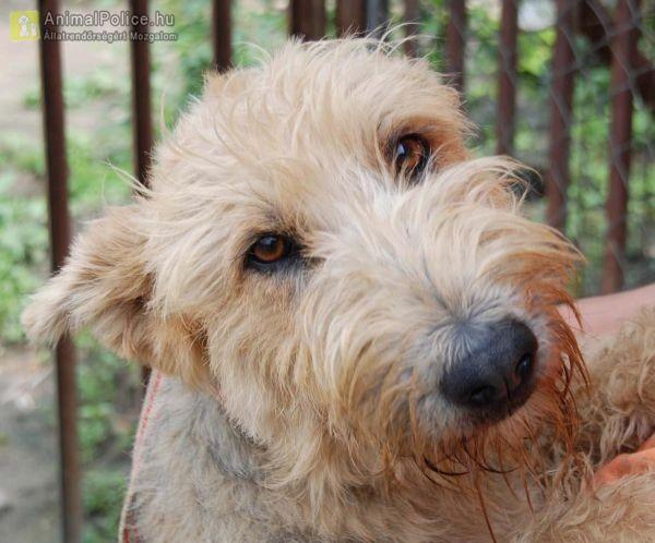 Orosházi Állat- és Természetvédő Közhasznú Egyesület