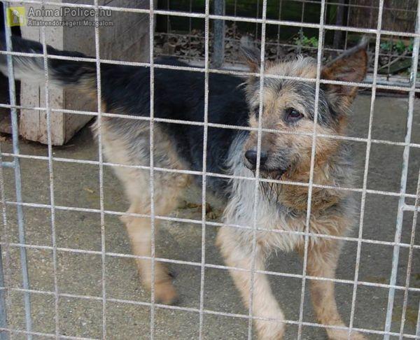 Állatvédő Egyesület Veszprém