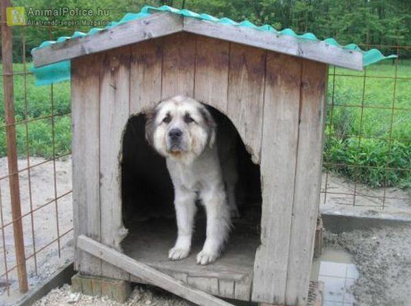Domus Optima Állatmentő és Állatvédő Közhasznú Egyesület