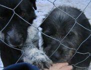 PET Állat- és Környezetvédelmi Egyesület
