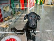 Fema Állatmentő És Állatvédelmi Egyesület