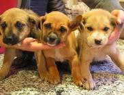 Minimentő Állatvédők Egyesülete