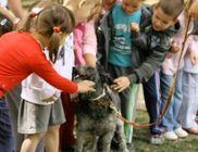 Dog Plusz Felelős Állattartók Egyesülete