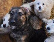 Együtt az Állatokért Állatvédő Közhasznú Egyesület