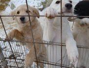 Csillagszem Állatvédelmi Alapítvány