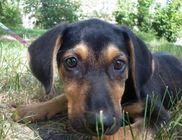 Ments meg! Oroszlányi Állatvédő Egyesület