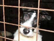 PHILIP Természet- és Állatvédő Egyesület