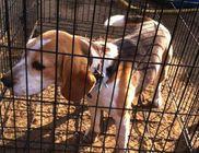 Pets Care Állatmentő és Környezetvédő Segélyegyesület