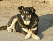 Tolna Megyei Állat- és Természetvédő Alapítvány