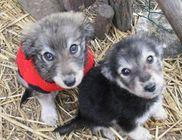 TordasZoo Állatmentő Farm Kiemelten Közhasznú Alapítvány