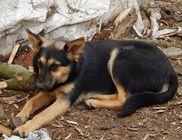 Harkány-Siklós Állat- és Természetbarátok Egyesülete Közhasznú Szervezet