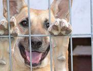 KUNKARCAGI Állatvédő és Állatbarát Egyesület