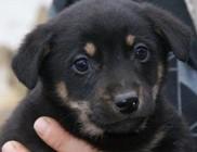 Lőrinci Kutyahűség Állatmentő Közhasznú Alapítvány