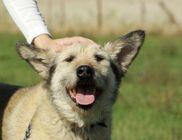 Pomázi Állatvédő és Állatsegítő Egyesület