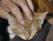 Alapítvány a macskákért