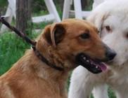Kóborka Állatvédő Egyesület