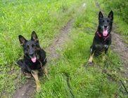 Kutya-segélyszolgálat Közhasznú Alapítvány