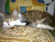Macskamentők Alapítvány