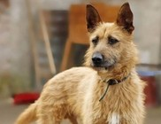 Elveszett Állatok Gyógyító, Ellátó, Elhelyező Alapítvány