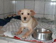 Miskolci Állatsegítő Alapítvány