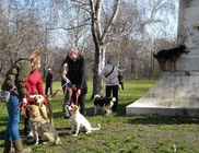 Állat és Ember Állat- és Természetvédő, Szabadidő és Kulturális Egyesület
